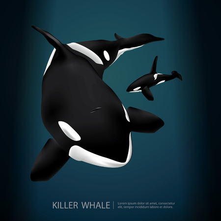 Killer Whale Under The Sea Vector Illustration Ilustrace