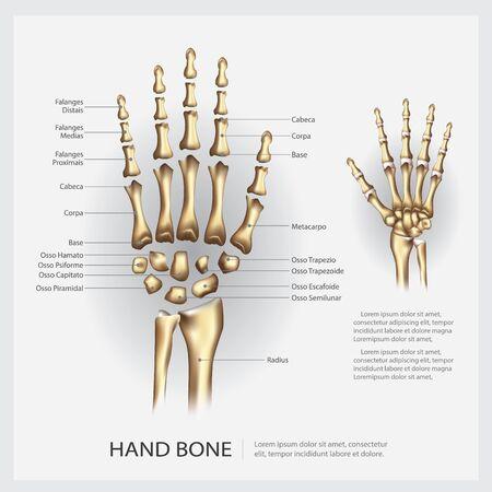 Human Anatomy Hand Bone Vector Illustration Stock Illustratie