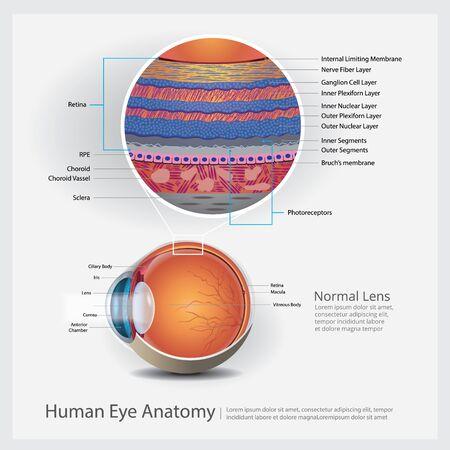 Human Eye Anatomy Vector Illustration Illustration