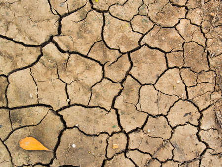 sequias: Cracked ground from drought