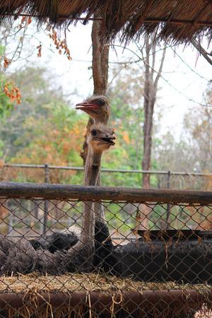 curiousness: Ostrich head,ostrich