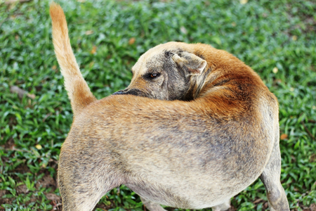 mangy: mangy dogs Stock Photo