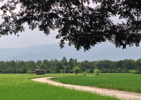 traditional textured: Road Through Paddy Rice Fields Stock Photo
