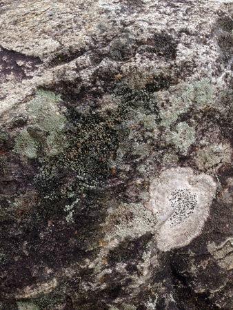 canvas: stone texture