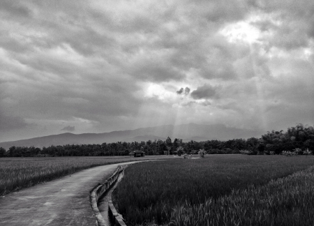 traditional textured: black and white Road Through Paddy Rice Fields
