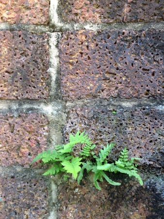 traditional textured: Green plant on the wall