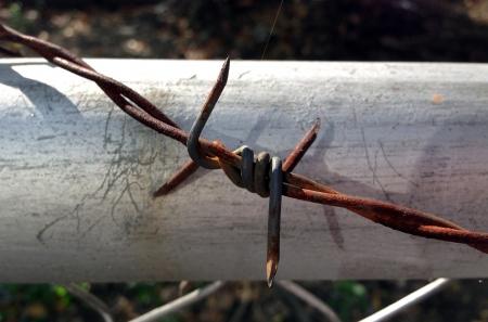 провода: колючая проволока фоне Фото со стока