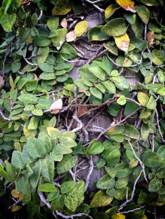 detail: green leaf texture