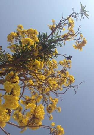 yellow flowers bloom in spring Stockfoto