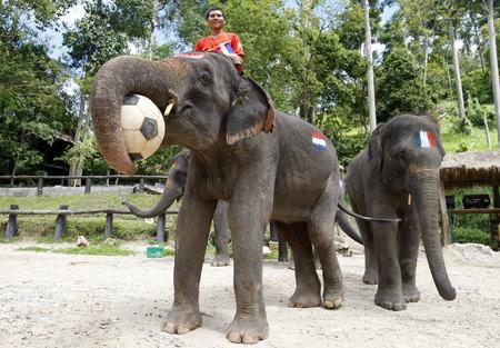 promover: Elefante de futebol para promover a Copa do Mundo de 2014 Editorial