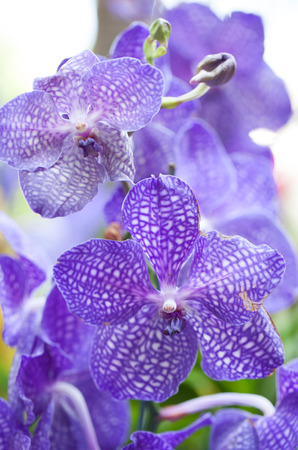 Violet orchid background Stock Photo