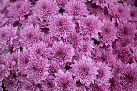 background of purple flowers