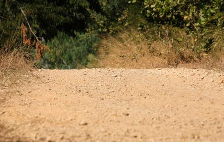 turf bog: Rural track