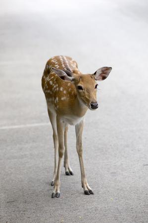 habitat: deer in habitat Stock Photo