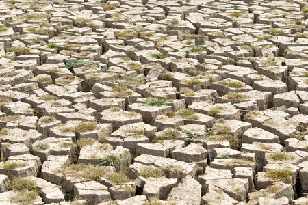 barrenness: Cracked earth and barren ground