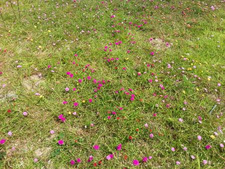 Beautiful Flower. Stock Photo