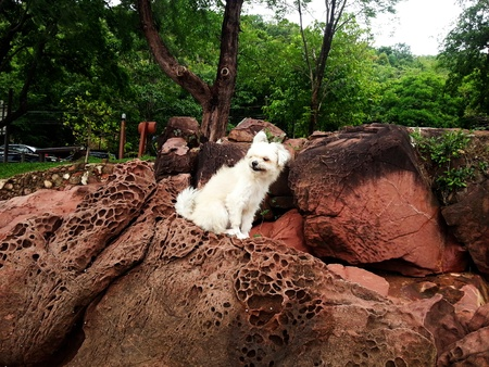 dog rock: The cute dog on the rock Stock Photo