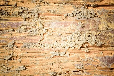 wood texture: Decay houtstructuur achtergrond Stockfoto