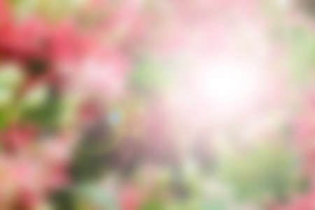 and naturally: Blurred Beautiful Flower, Naturally beautiful flowers in the garden Stock Photo