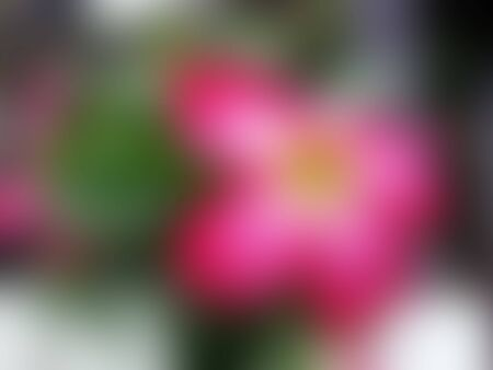 and naturally: Blurred Naturally beautiful flowers in the garden