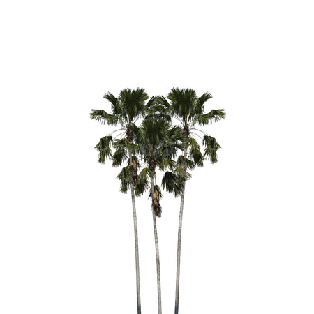 Betel palm heart shape isolated on white background, clipping path included. Banco de Imagens