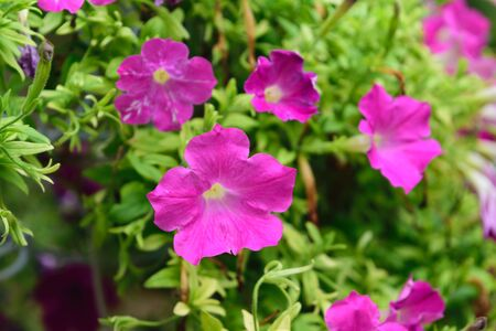 and naturally: Beautiful Flower, Naturally beautiful flowers in the garden