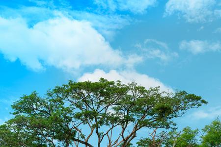 Big tree on sky background. Stock Photo
