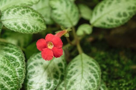 and naturally: Beautiful red flower, Naturally beautiful flowers in the garden