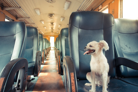 old train: The cute Dog on the train, Vintage style