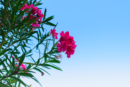 and naturally: Beautiful pink flower, Naturally beautiful flowers in the garden