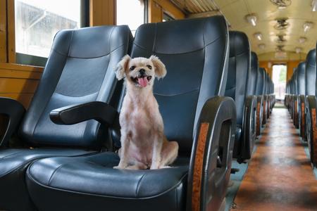 The cute Dog on the train Banco de Imagens