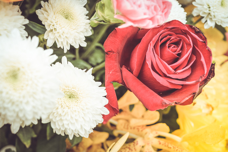 background colors: Beautiful red rose flower in a bouquet, Naturally beautiful flowers in the garden , process in vintage style