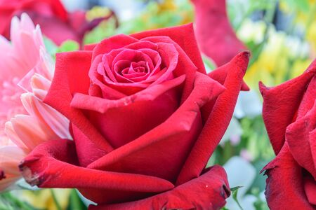 and naturally: Beautiful red rose flower in a bouquet, Naturally beautiful flowers in the garden
