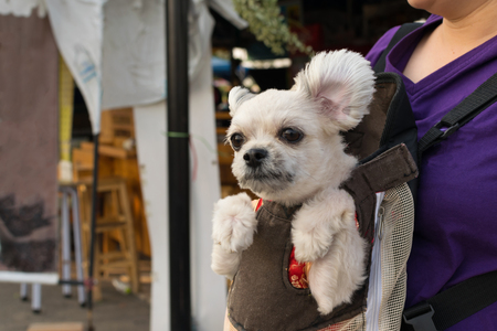 knapsack: Cute Dog staying in the knapsack or bag by Thai women shopping in market Stock Photo