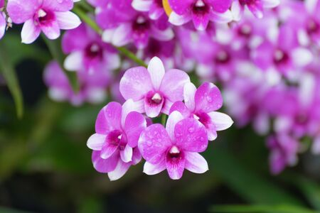 and naturally: Beautiful purple orchids flower, Naturally beautiful flowers in the garden