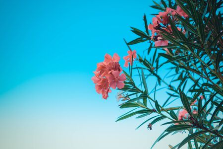Beautiful pink flower, Naturally beautiful flowers in the garden