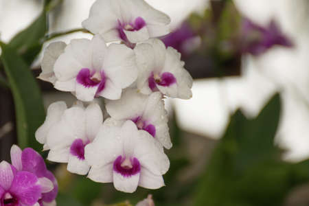 and naturally: Beautiful purple white orchids flower, Naturally beautiful flowers in the garden