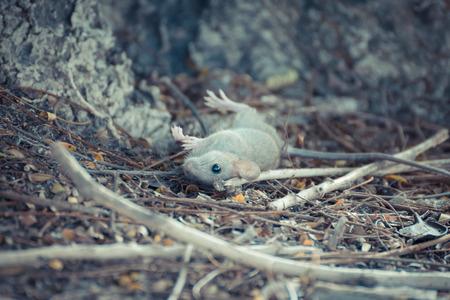 under ground: Rat dead on ground under the tree , process in vintage style