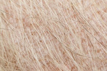 lepra: Macro de la piel del perro y la piel dermatitis de raza mixta con Shih-Tzu, Pomerania y caniche, color beige