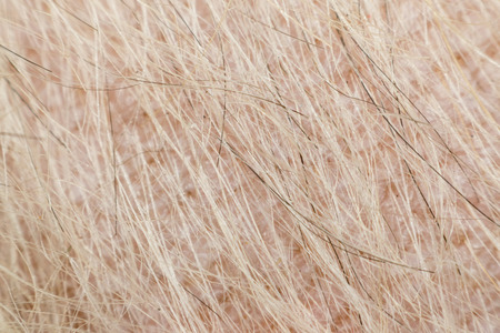 grey rug: Macro of dog fur and dermatitis skin mixed breed with Shih-Tzu, Pomeranian and Poodle, Beige color Stock Photo