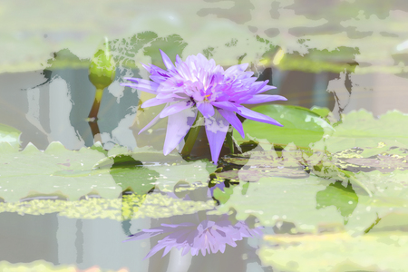 public domain: Lotus waterlily flower purple color, Naturally beautiful flowers in the garden , process in art water color style with world map (Outline elements of world map image from NASA public domain)