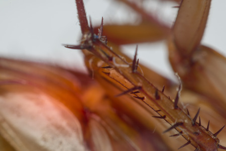 Macro of cockroach insects of the order Blattodea. Cockroach is carrier of Bacteria, Birus, Protozoal infections and Fungus. , process in red danger signs style Stock Photo