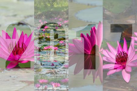 蓮の花のテーマ、庭の自然に美しい花で幸せな新年 2017 写真素材