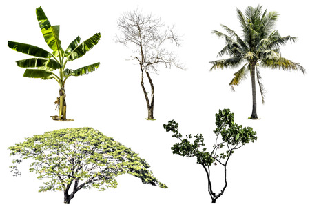 Collection of tree (Banana tree, Other tree, Coconut palm and Dead tree) green color isolated on white background Stock Photo