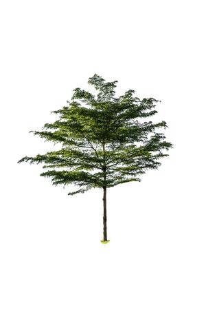 Tree green color isolated on white background
