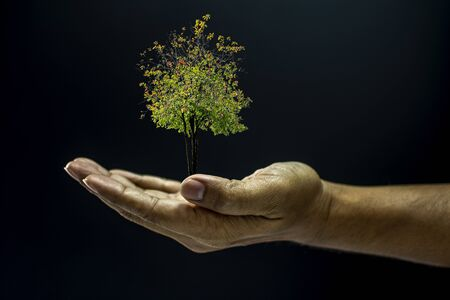 Hand of asia man holding a tree is environment helping giving or beg concept on black background dark style Stock Photo