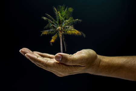 Hand of asia man holding coconut palm tree is environment helping giving or beg concept on black background dark style