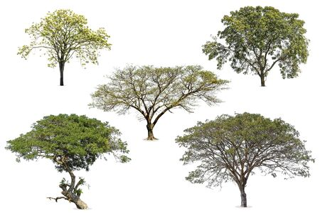 Collection of tree green color isolated on white background Stock Photo