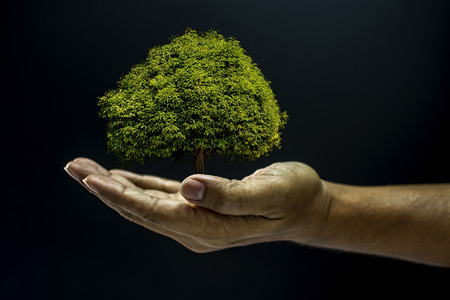 beg: Hand of asia man holding a tree is environment helping giving or beg concept on black background dark style Stock Photo