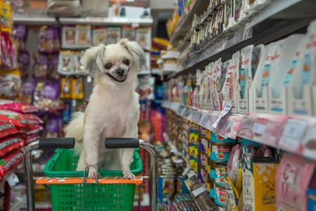 Bangkok, Thailand - 8 april 2017: Hond zo leuk gemengd ras met Shih-Tzu, Pomeranian en Poedel wacht een huisdier eigenaar voor het winkelen van een huisdiervoer (Hond, Kat en andere) op huisdier goederenplank in een dierenwinkel. Redactioneel